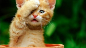 Even cute kittens know how to optimize a blog post.