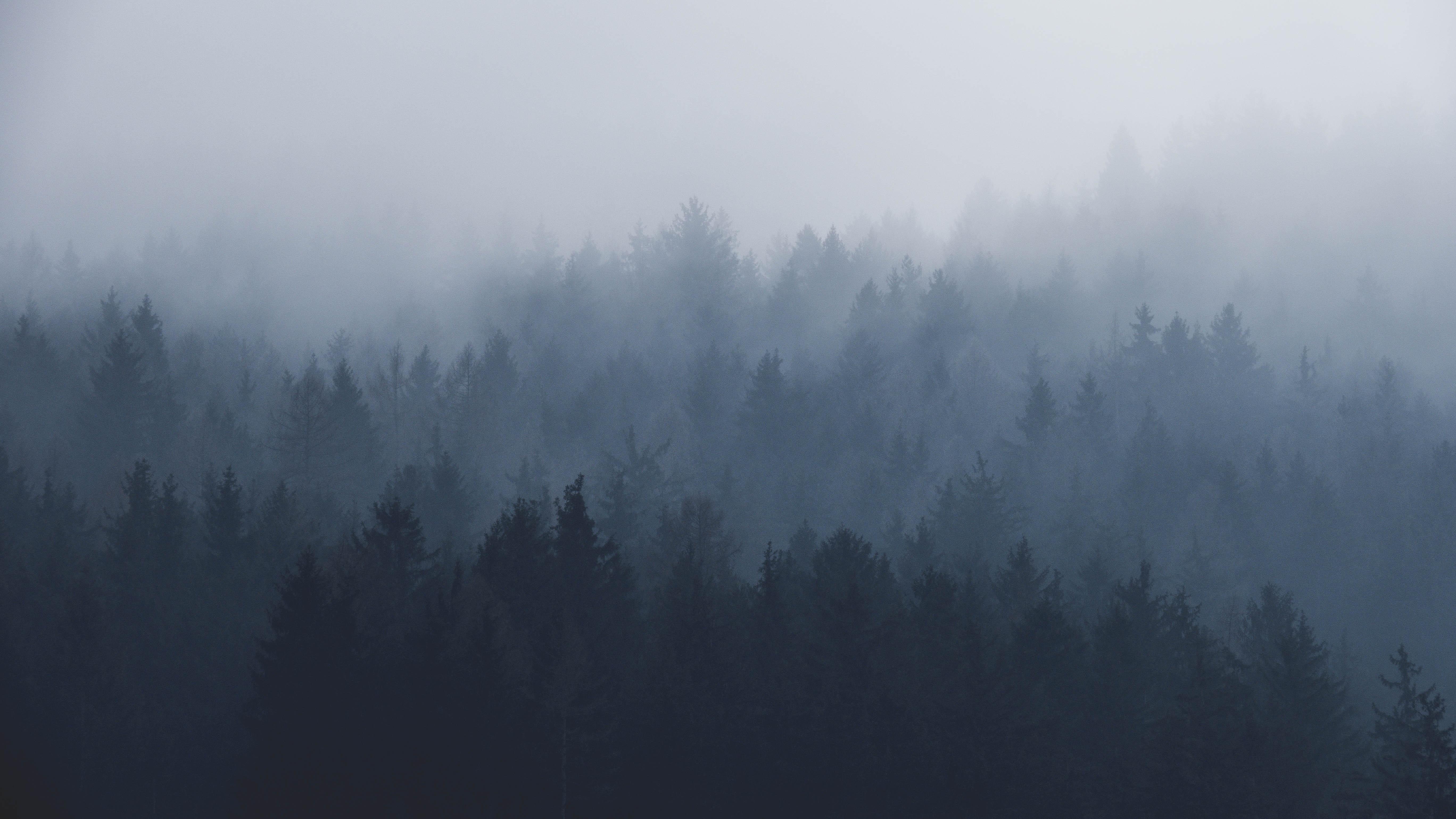 Canva - Beautiful Misty Landscape of Forest Trees.jpg