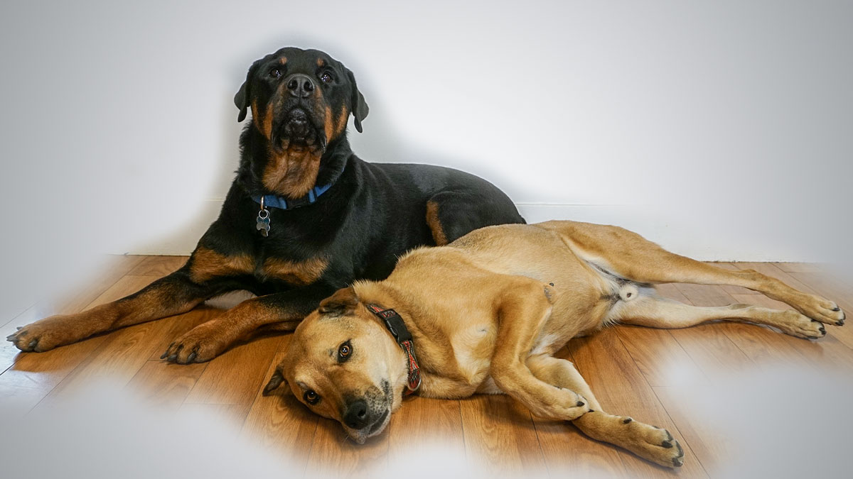 Hank and Ace